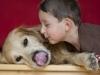 AUT, 2010-10-17, Featurefoto Hund und Kleinkind fur spielen, Familienhund, Beziehung Hund zu Kind etc.; im Bild (v.l.n.r.): Florian (Muhlanger, model released) mit seinem dreiahrigen Golden Retriever