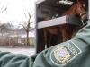 REPORTAGE THEMENBILD - REITERSTAFFEL DER BAYERISCHEN POLIZEI IN MUENCHEN IM EINSATZ